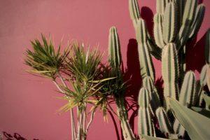 Cactus_red